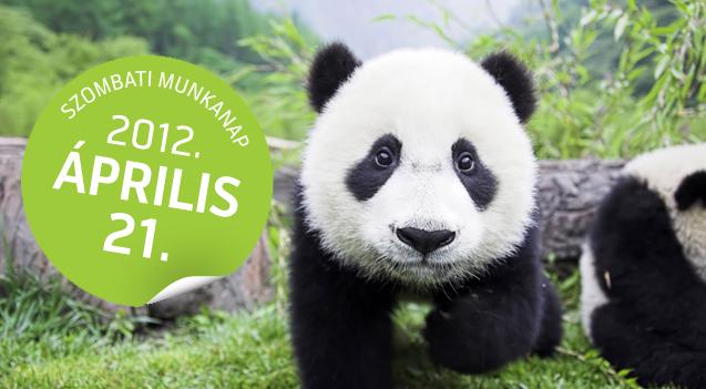 dolgozz otthonrol panda