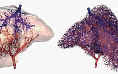 Vérereket hoztak létre a 3D nyomtatott szervekben
