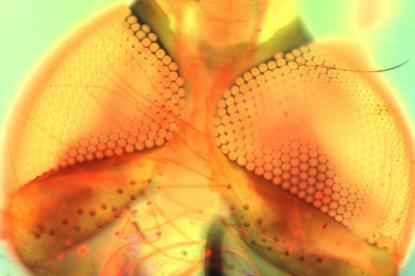 Lenyűgöző a GE új mikroszkópja