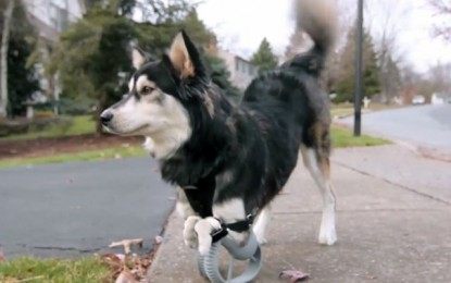 3D nyomtatással kapott lábakat a kutya