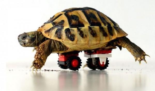 lego-tortoise