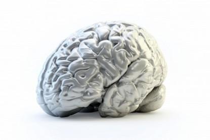Bőrsejtekből fejlesztettek emberi agymodellt az Ohiói Állami Egyetemen