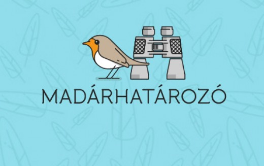 madarhat3