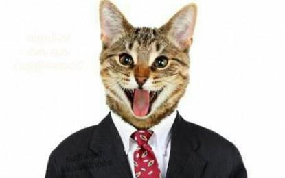 Berágott a macskás képekre a Facebook?