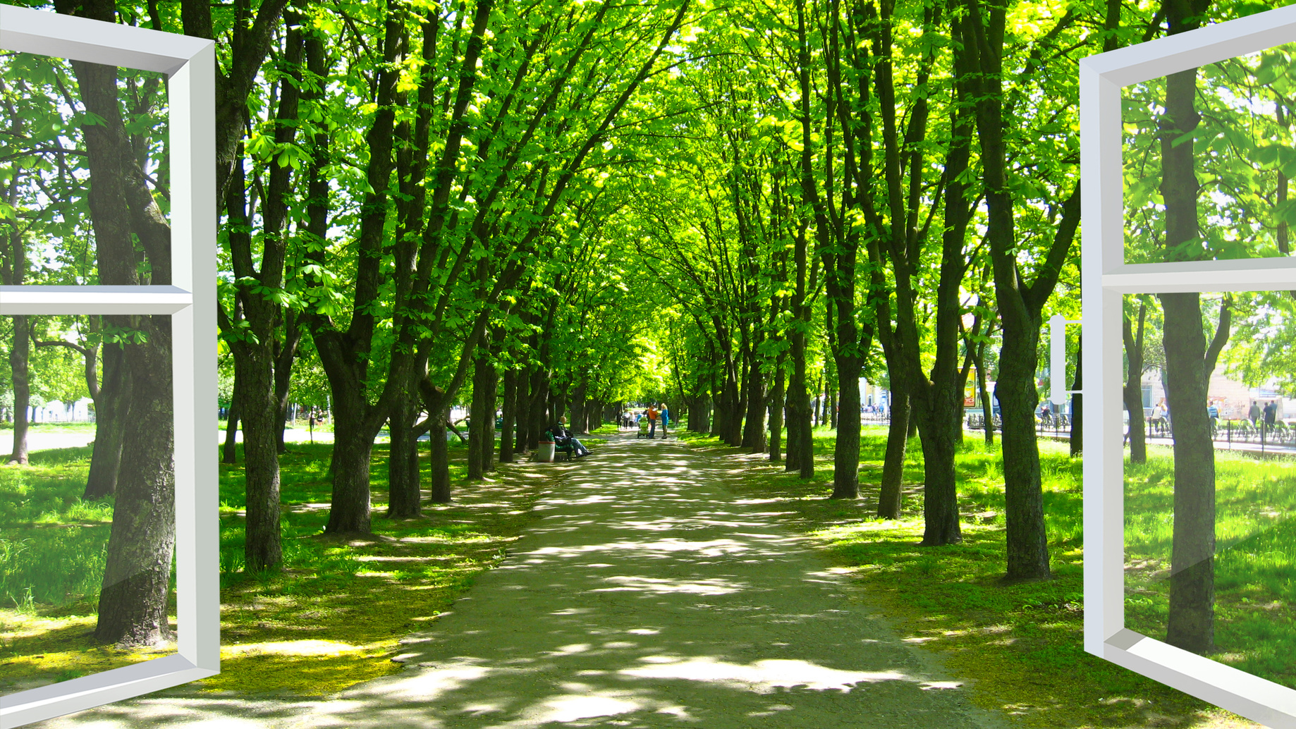 window opened to the beautiful park with many green trees