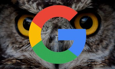 google-owl1-ss-1920