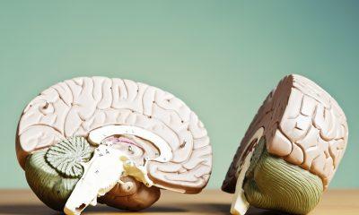g-brain-halves-56a792d35f9b58b7d0ebd08a