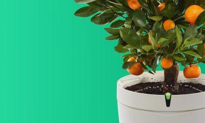 parrot-pot-flowerpot-black-desc1