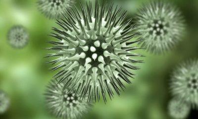 virus-cells