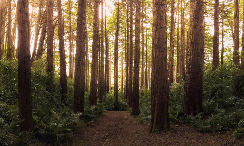 nature-forest-trees-572688