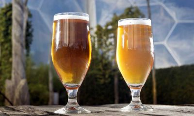 glasses-beer-biomes-hop-poles-2-3