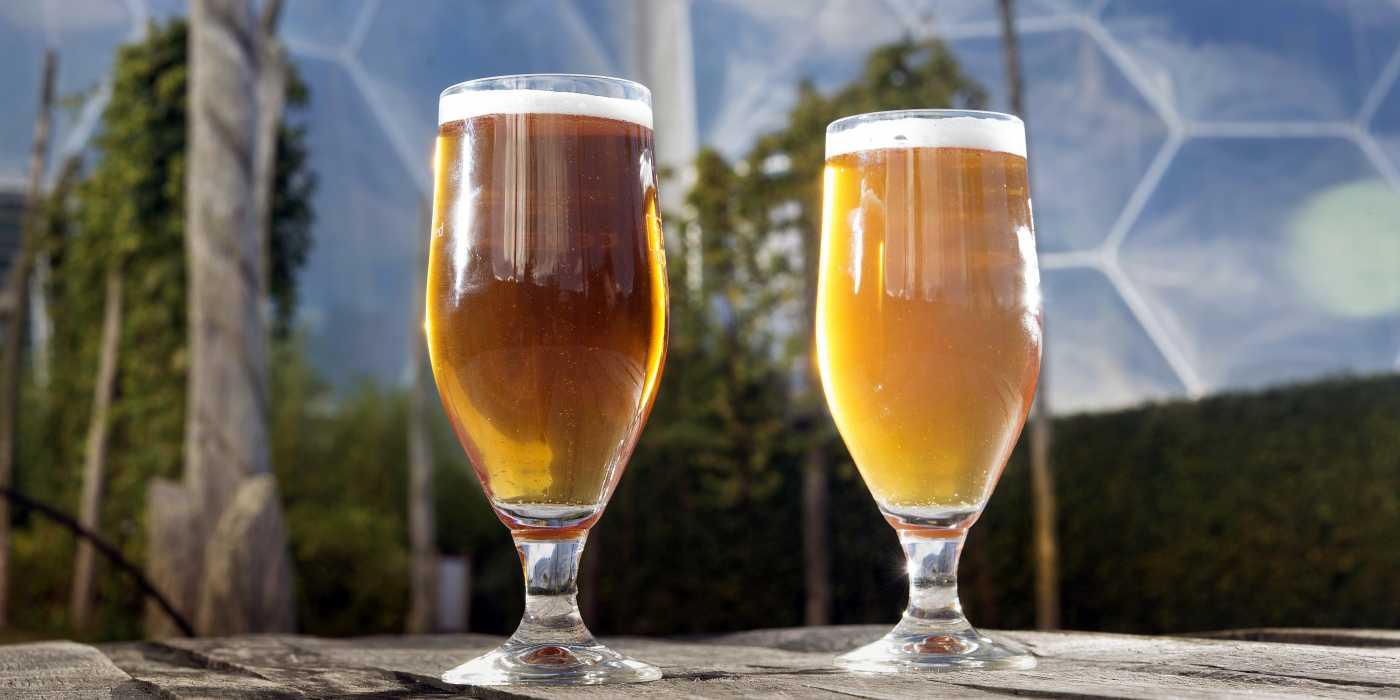 glasses-beer-biomes-hop-poles-2-3