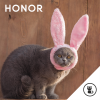 honor_macska_vagy_nyul