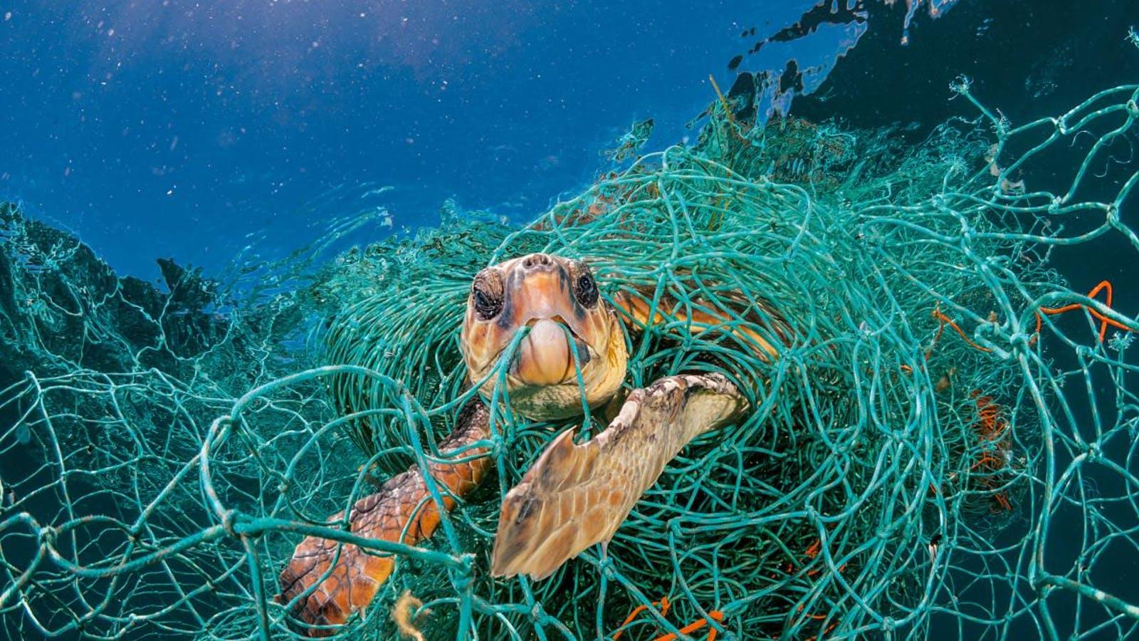plastic-waste-single-use-worldwide-consumption-animals-2-adapt-1190-1