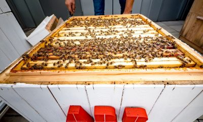 data_analysis_through_beekeeping_at_abb