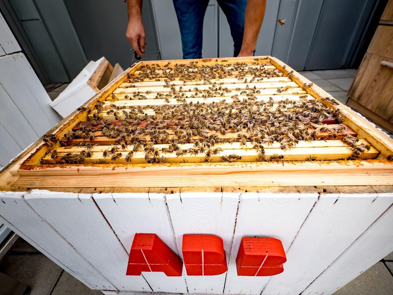 data_analysis_through_beekeeping_at_abb