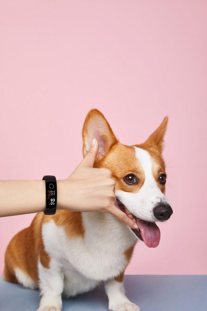 Honor_Band_5_dog_web