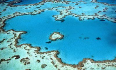 koralllzátony